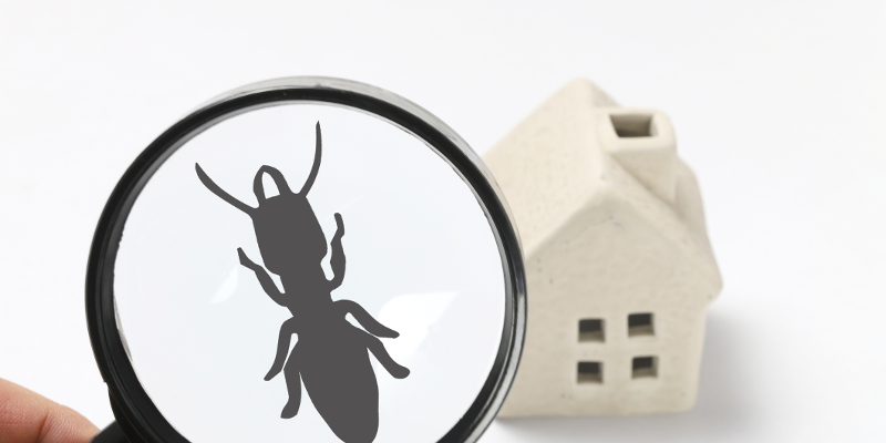 Indoor Pest Control in West Des Moines, Iowa