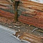 Termite Inspection in Des Moines, Iowa