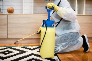 How to Tell if You Need Termite Treatment