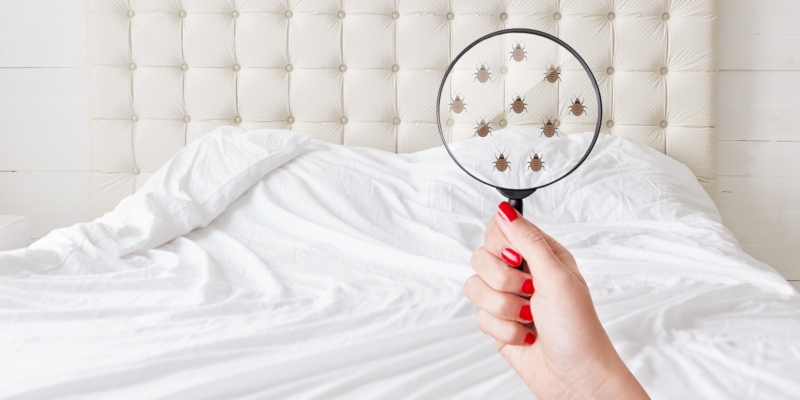 How Bed Bug Removal Works